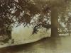 Uffculme beech tree seat across fi.nt house - 42