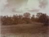 Uffculme house from across meadows - 37