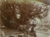 Uffculme path and yew approx 1910